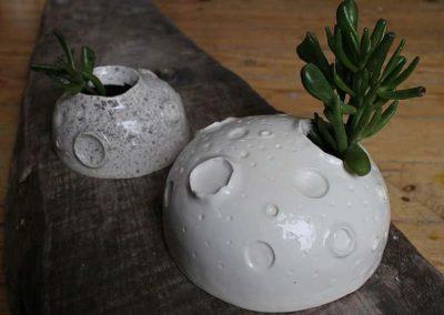 Måneformede planteskjuler